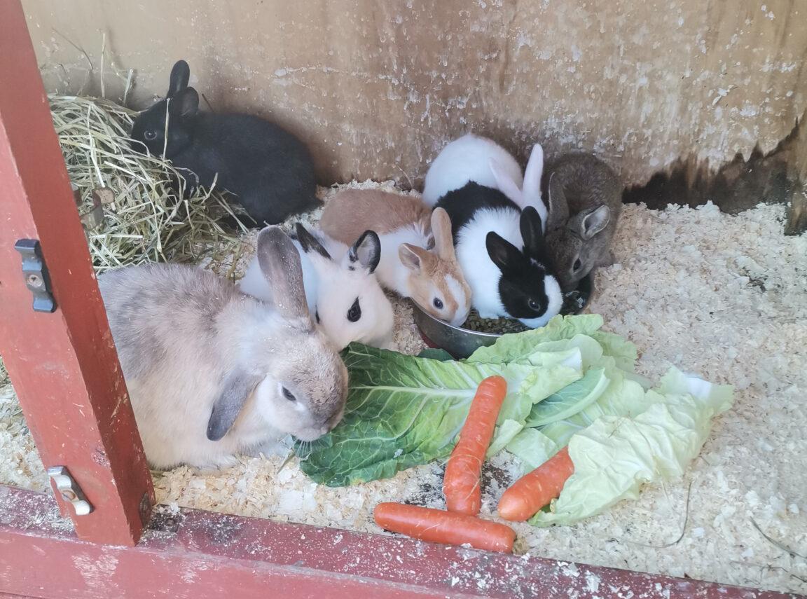 Baby Rabbits Farmer Terry